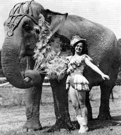 circus_elephant.jpg