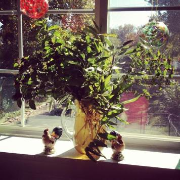herbs make a nice arrangement on the windowsill