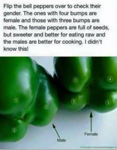 peppergender